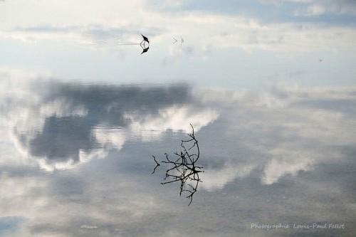 Rêve bleuté-PhotosLP Fallot.JPG