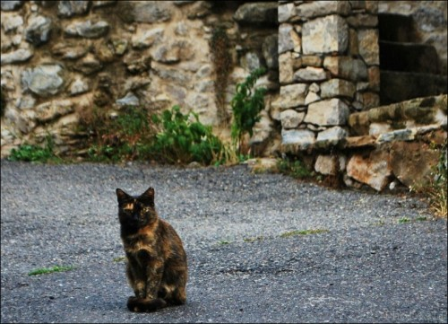 chat,village,photo